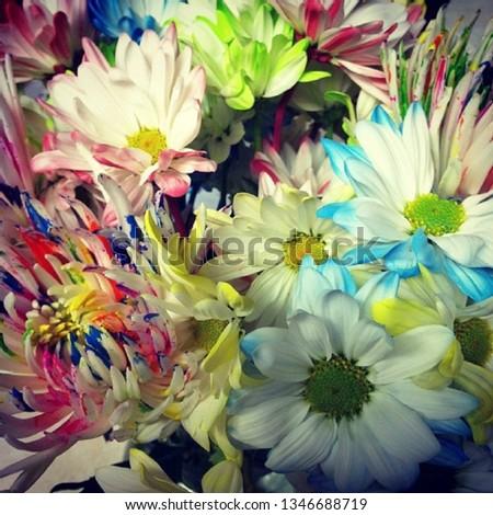 Daisy, Daisy, Daisy #1346688719
