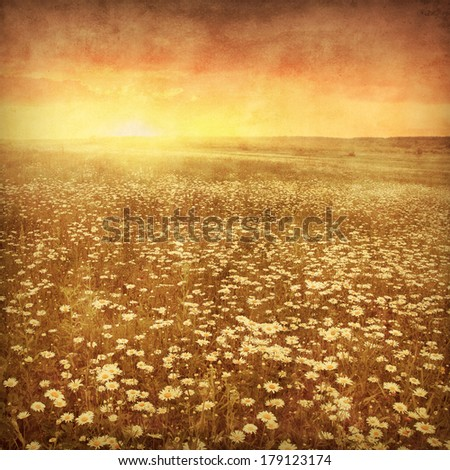 Daisy field at sunset in grunge and retro style. #179123174
