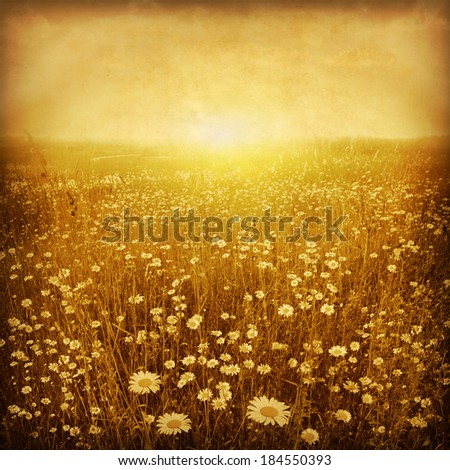Daisy field at sunset in grunge and retro style. #184550393