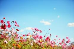Daisy flower against blue sky,Shallow Dof.