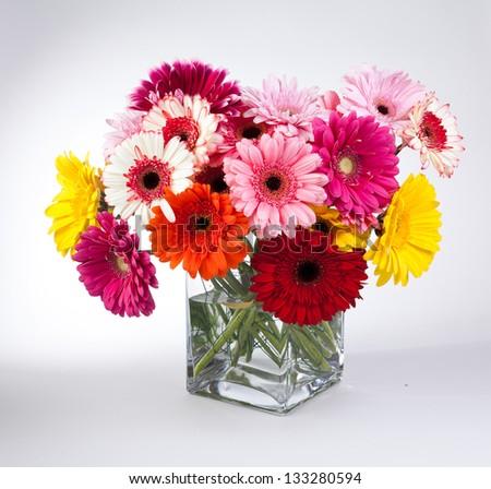 Daisy flower gerbera bouquet on white background