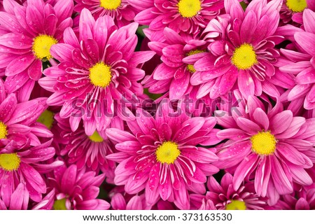 Daisy flower - Spring flower close up,Split tone, soft focus