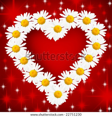 Daisy flowers arranged as the heart over red background