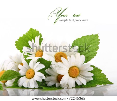 Daisy flowers in white background (selective DOF)