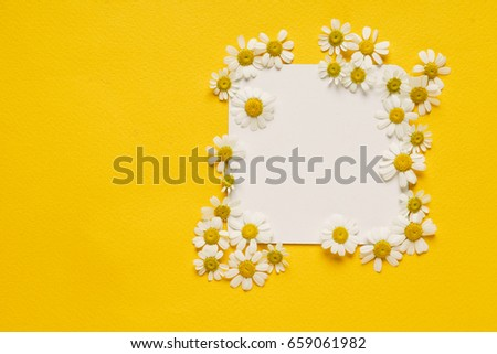 daisy flowers on the paper card