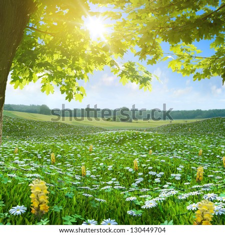 Daisy flowers Spring meadow buttercup 3d