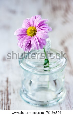 Daisy in old glass bottle - stock photo