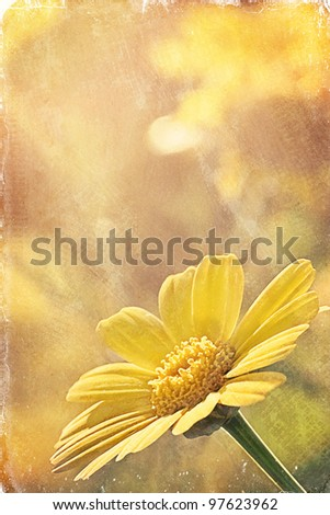Daisy in the Sunlight