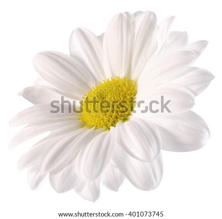 daisy isolated on the white background