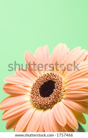 daisy macro isolated over green with copyspace, shallow depth of field - stock photo