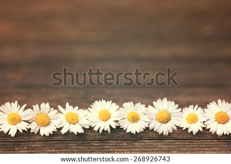 Daisy on wooden background with copy space