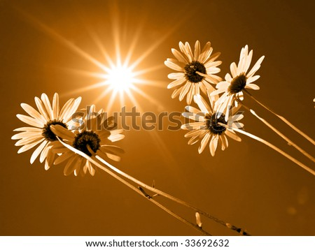 daisywheels - stock photo