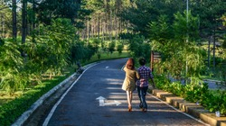 Dalat, Vietnam - Oct 28, 2015. A couple walking on street with many pine trees in Dalat, Vietnam.