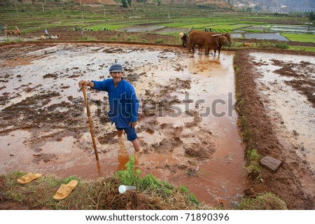 DALI, CHINA- MAY 22: Chinese farmer works hard on rice field on May 22, 2010 in Dali, China. For many farmers rice is the main source of income (around $800 annual).