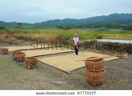 DALI, CHINA - MAY 22: Chinese farmer works hard on rice field on May 22, 2010 in Dali, China. For many farmers rice is the main source of income (around $800 annual).