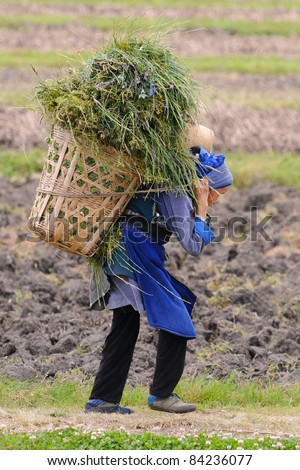 DALI, CHINA - MAY 22: Chinese farmer works in a rice field on May 22, 2010 in Dali, China. For many farmers rice is the main source of income (around $800 annual).