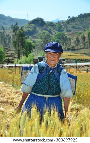 DALI, CHINA - MAY 22, 2015. Unidentified Chinese farmer works hard on rice field in Dali, China. For many farmers rice is the main source of income (around $800 annual).