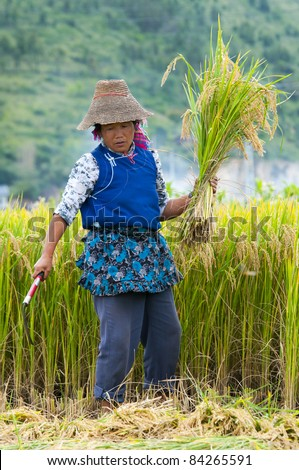 DALI, CHINA - MAY 22: Unidentified Chinese farmer works hard on rice field on May 22, 2010 in Dali, China. For many farmers rice is the main source of income (around $800 annual).