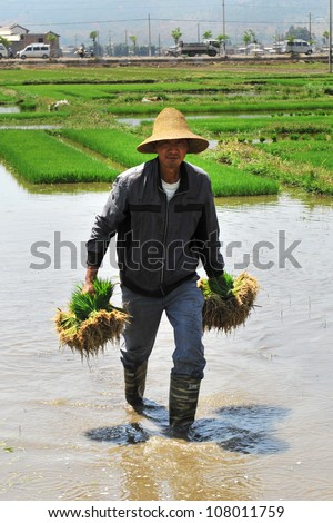 DALI, CHINA - MAY 20: Unidentified Chinese farmers work hard on rice field on May 20, 2012 in Dali, China. For many farmers rice is the main source of income (around $800 annual).