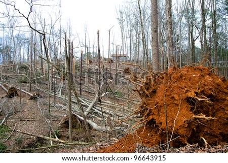 DALLAS, GA-MARCH 3: Trees downed by a tornado in Dallas, GA, on March 3, 2012. A line of tornadoes ripped through the Southeast and Midwest on March 2, 2012, killing more 37 people.