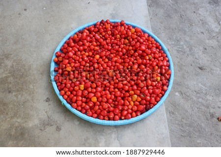 Dalle chillies, freshly harvested red ripe round chillies  Photo stock ©