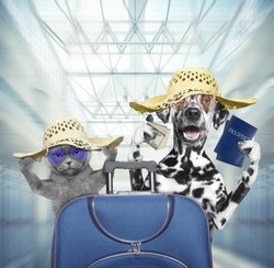 Dalmatian dog and cat wait at the airport with suitcase