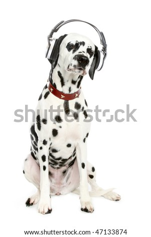 Dalmatian puppy listening to music on headphones. - stock photo