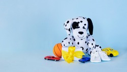 Dalmatian puppy toy with small present, toy cars and basketball ball on light blue background. Greeting card, baby shower invitation, baby birth, gender reveal concept.