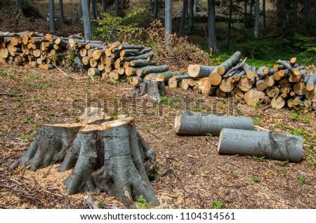 Damage to nature. Deforestation, destruction of deciduous forests. Europe #1104314561