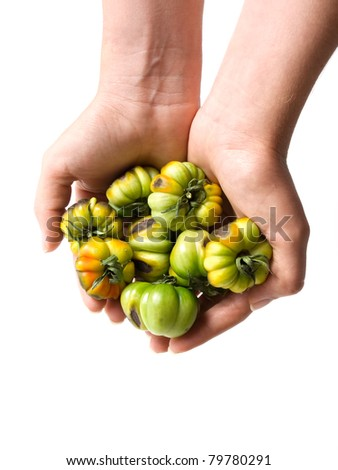 Damaged tomato crops in woman's hands on a white background.
