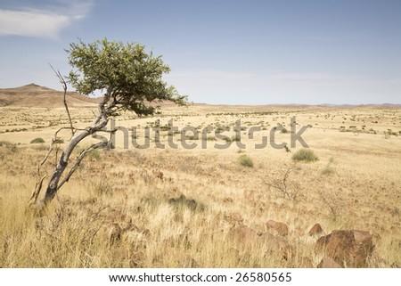 Damaraland, Republic of Namibia, Africa