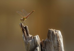 damsel fly waiting on wood by pond