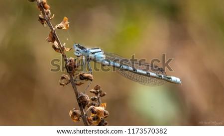 Damselfly on a branch #1173570382