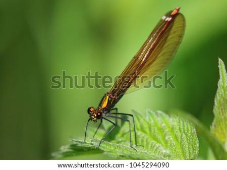 Damselfly on a leaf #1045294090
