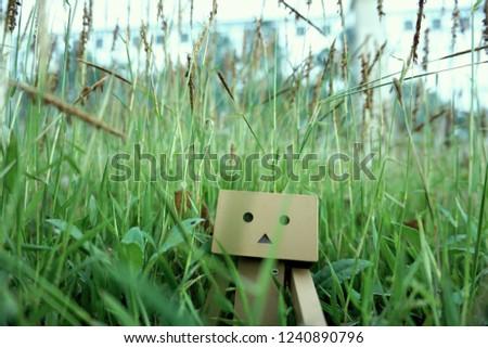 Danbo exploring  in the grass