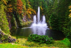 Dancing fountain in a quiet pond, surrounded by pine forest.  Butchart Gardens on Vancouver Island, Canada