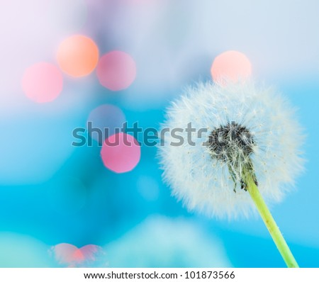 Dandelion and the colorful lights