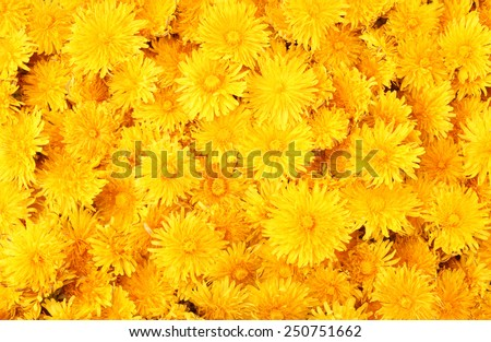 Dandelion background #250751662