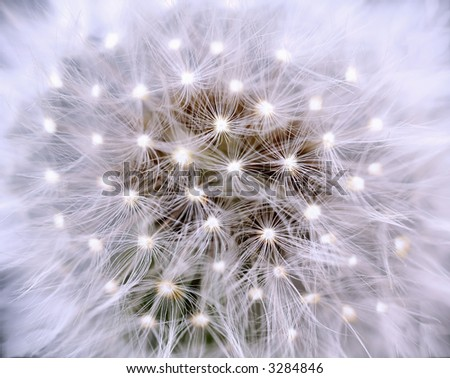 Stock Photo Dandelion, close-up, with light-points