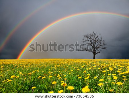 dandelion field and dead tree under cloudy sky with rainbow #93854536