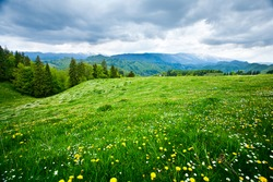 Dandelion field and mountains