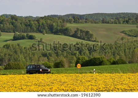 Dandelion field at the road