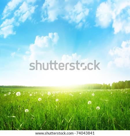 Dandelion field,blue sky and sun. #74043841