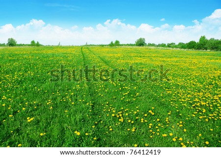 Dandelion field with road and blue sky.