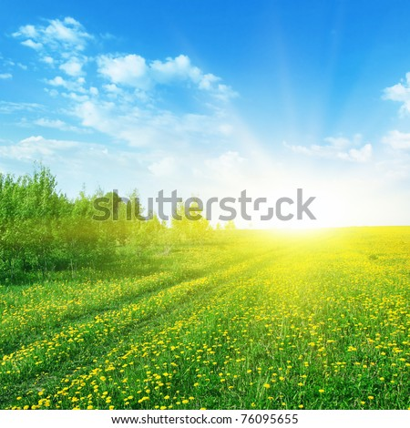 Dandelion field with road and sunlight.