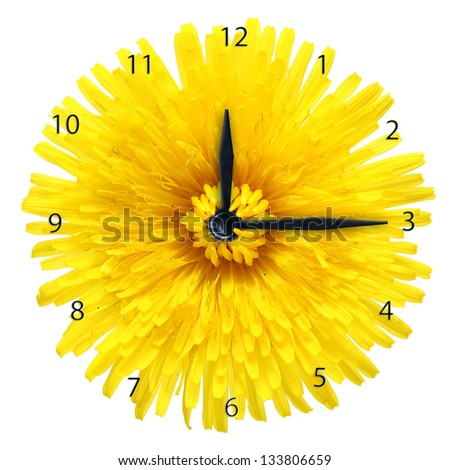 Dandelion flower - clock isolated on white background.