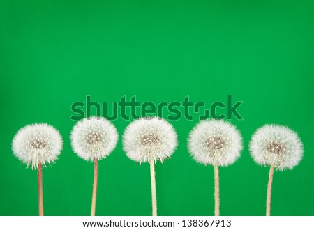 dandelion fluff or seeds on a green background