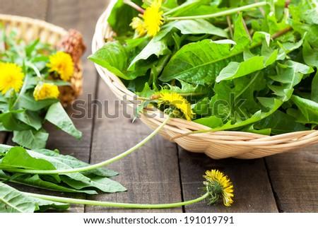 dandelion leaves and flowers