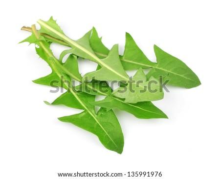 dandelion leaves isolated
