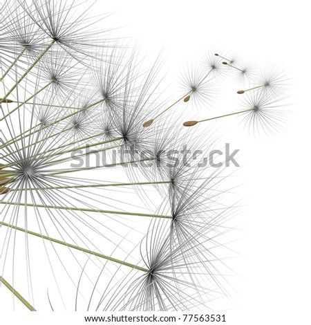 dandelion parachutes by the wind on a white background